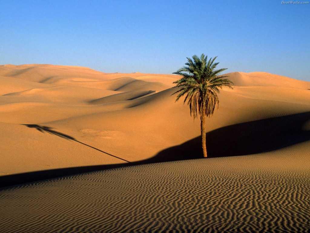 Rajastan Deserts